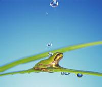 カエル 28144007047| 写真素材・ストックフォト・画像・イラスト素材|アマナイメージズ