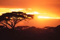 夕焼けと大木 28144017585| 写真素材・ストックフォト・画像・イラスト素材|アマナイメージズ