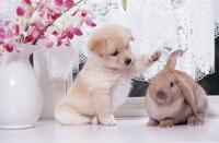 子犬とウサギ