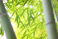 竹林 28144029148| 写真素材・ストックフォト・画像・イラスト素材|アマナイメージズ