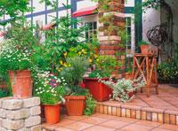 植木鉢の並んだ玄関