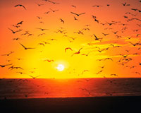 ベニスビーチの夕陽とカモメ