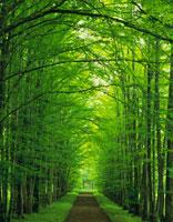 森林 28144045336| 写真素材・ストックフォト・画像・イラスト素材|アマナイメージズ