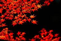 紅葉 28144055920| 写真素材・ストックフォト・画像・イラスト素材|アマナイメージズ