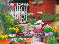 玄関先に並ぶ植木鉢