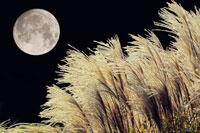 ススキと月 28144066034| 写真素材・ストックフォト・画像・イラスト素材|アマナイメージズ
