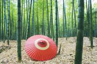 竹林と傘 28144075614| 写真素材・ストックフォト・画像・イラスト素材|アマナイメージズ