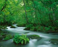 奥入瀬渓流 28144076744| 写真素材・ストックフォト・画像・イラスト素材|アマナイメージズ