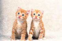二匹の仔猫