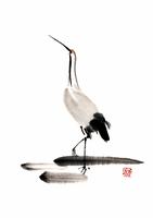 鶴 28144079901| 写真素材・ストックフォト・画像・イラスト素材|アマナイメージズ