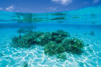 珊瑚礁 28144080441| 写真素材・ストックフォト・画像・イラスト素材|アマナイメージズ