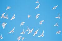鳥 28144084476  写真素材・ストックフォト・画像・イラスト素材 アマナイメージズ