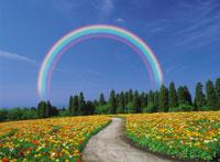 虹と花畑 28144084552| 写真素材・ストックフォト・画像・イラスト素材|アマナイメージズ