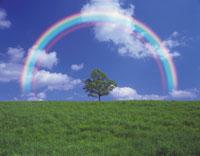 一本の木と虹
