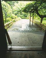 玄関から見た日本庭園