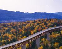 高速道路と紅葉