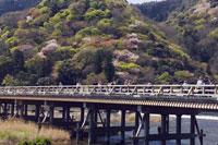 桜咲く嵐山