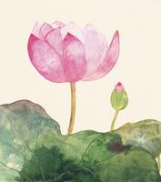蓮の花 イラスト