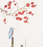 梅とカワセミ イラスト 28144088524| 写真素材・ストックフォト・画像・イラスト素材|アマナイメージズ