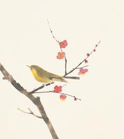 梅とうぐいす イラスト