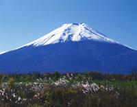 ススキと富士山 28144089060| 写真素材・ストックフォト・画像・イラスト素材|アマナイメージズ