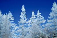 冬の木々 28144089426| 写真素材・ストックフォト・画像・イラスト素材|アマナイメージズ