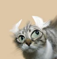 猫 CG 28144089534| 写真素材・ストックフォト・画像・イラスト素材|アマナイメージズ