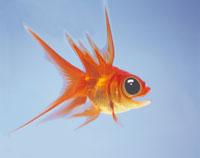驚いた金魚 CG