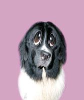 犬 CG 28144089588| 写真素材・ストックフォト・画像・イラスト素材|アマナイメージズ