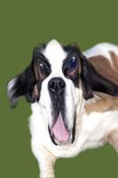 犬 CG 28144089612| 写真素材・ストックフォト・画像・イラスト素材|アマナイメージズ