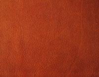 牛革 28144091199| 写真素材・ストックフォト・画像・イラスト素材|アマナイメージズ