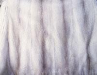 毛皮 28144091204| 写真素材・ストックフォト・画像・イラスト素材|アマナイメージズ