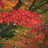 糠平湖の紅葉