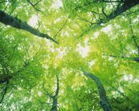 森林と木漏れ日