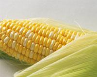 トウモロコシ 28144100741| 写真素材・ストックフォト・画像・イラスト素材|アマナイメージズ