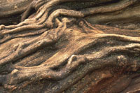樹木イメージ