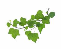 緑葉イメージ 28144101080| 写真素材・ストックフォト・画像・イラスト素材|アマナイメージズ