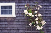 白い小さな窓と白い花