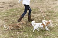 走る犬と女性