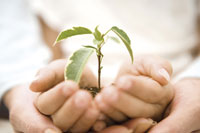 植物を持つ親子の手 28174005693| 写真素材・ストックフォト・画像・イラスト素材|アマナイメージズ