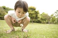 タンポポの綿毛を吹く子供