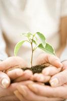 苗木を抱える親子 28174006163| 写真素材・ストックフォト・画像・イラスト素材|アマナイメージズ