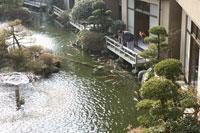 池の鯉を眺める夫婦