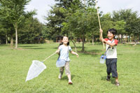 昆虫採集をする子供