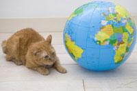 地球と猫 28174008318| 写真素材・ストックフォト・画像・イラスト素材|アマナイメージズ
