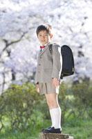 桜と新入学の男の子