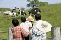 牧場の牛を眺める家族