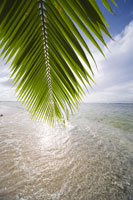 椰子の葉と海