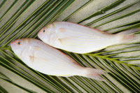 魚と椰子の葉