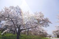 桜と青空 28174009653| 写真素材・ストックフォト・画像・イラスト素材|アマナイメージズ